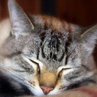 Кот,который всегда спит... :: Галина Полина