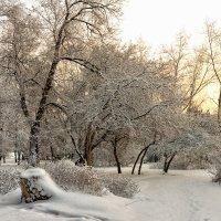 зимним утром :: cfysx