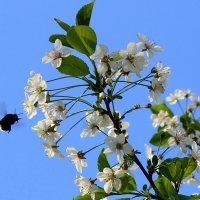 Чары вишни. :: Валентина ツ ღ✿ღ