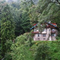 В теплых лесах безымянной реки :: Mari_L