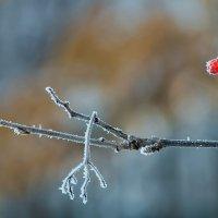 Декабрь. Сахарная веточка! :: Владимир Максимов