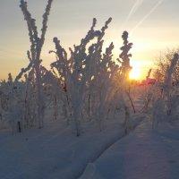 Узоры декабря :: Ольга