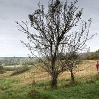 Одинокое дерево :: Владимир Рязанов