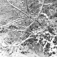 зима :: Наталья Сазонова