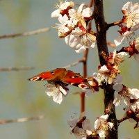 на весенних цветах 3 :: Александр Прокудин