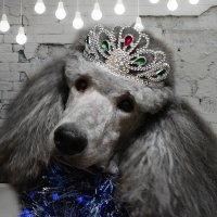 новогодний король :: Татьяна Малафеева