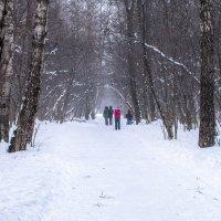 Снег идет... :: Владимир Безбородов
