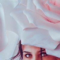 Роза :: Nikki Lashkevich