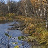 Лесное озеро :: Сергей Цветков