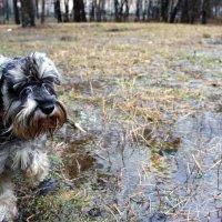 История о собаках в декабре. :: ВАЛЕРИЙ