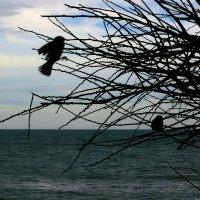 Море и воробьи :: Людмила