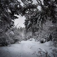 Зима пришла :: Владимир Дальский