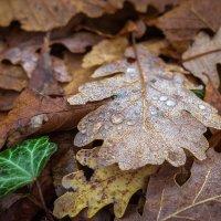 утро в лесу :: Sergey Bagach