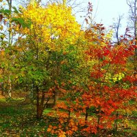 Осенний светофор. :: Антонина Гугаева