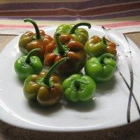 То ли перец, то ли помидоры. :: Ирина ***