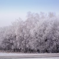 Зима :: Гульнара