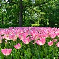 Скоро весна ..... :: Николай Танаев