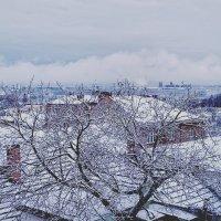 снег :: Ольга Богачёва