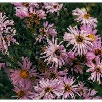Цветы :: Любовь