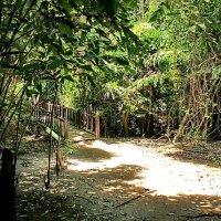 Мостик в джунглях :: Александр