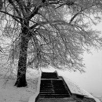 зимняя лесенка :: Наталья Сазонова