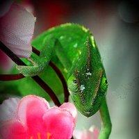 а, цветочек для дамы :: Олег Лукьянов