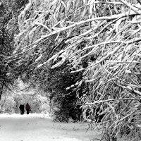 Графика  зимы :: олег свирский