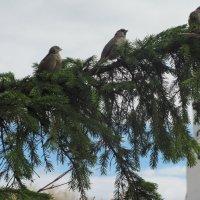 Птицы в городе :: Лидия Суюрова
