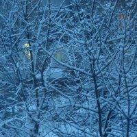 Зима на подходе... :: Татьяна Юрасова