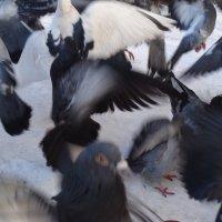 Свадебный вальс голубей вокруг яблока искушения!... :: Алекс Аро Аро