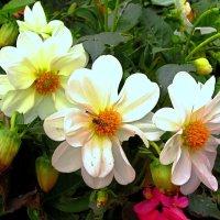 Октябрьские цветы :: Сергей Карачин