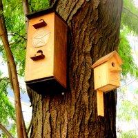 Птичкин дом со знаком качества! :: Нина Бутко