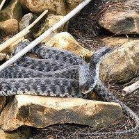 Змей... :: Александр Гризодуб