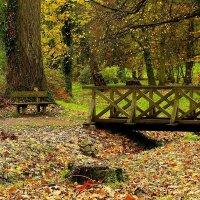 Осень – повод подумать, почувствовать «здесь» и «сейчас», :: Юрий. Шмаков