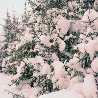 новогодние ёлочки.... :: леонид логинов