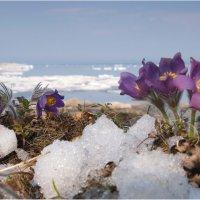Весна на Байкале :: Владимир Тюменцев