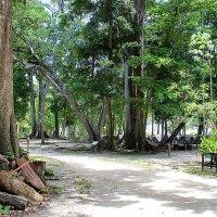 Бунгало в джунглях :: Александр