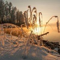 С вечерними лучами солнца... :: Сергей Герасимов