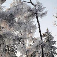 Зимние убранство :: Наталья Тимофеева