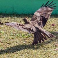 Аэродинамика крыла :: Oleg