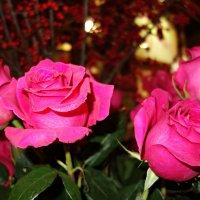 Розы в декабре... :: Galina Dzubina