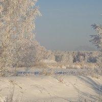 Обжигает мороз, ветви клонит к земле...Отрешившись отгрёз, лес стоит в серебре... :: Елена Ярова