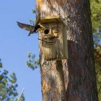 Знакомое гнездо :: leo yagonen