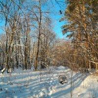 Тихо в лесу, только не спит барсук..:) :: Андрей Заломленков