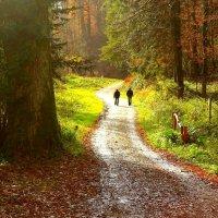 В сказочный лес. :: Юрий. Шмаков
