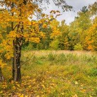 Осень в Кузьминках :: Владимир Брагилевский