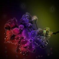 Цветы сакуры :: Светлана Волконская