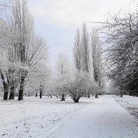 Городской сквер в снежном убранстве :: Маргарита Батырева
