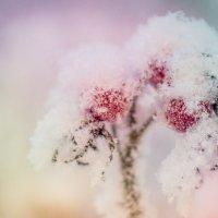 под снегом :: Iuliia Efremova