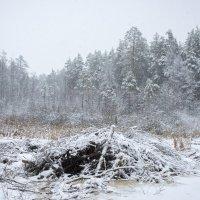 Зима в муромских лесах #2 :: Андрей Попов